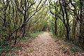 Santoña - trail 7.jpg