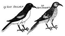Illustration from John Ray's Synopsis methodicam avium & piscium (1713)