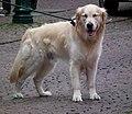 Schläfriger Hund Fulda Juni 2012.JPG