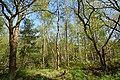 Schleswig-Holstein, Fockbek, Naturschutzgebiet Fockbeker Moor NIK 1637.jpg