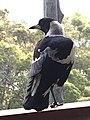 Scotland Island Sydney NSW 34.jpg