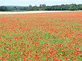 Sea of Red - geograph.org.uk - 494424.jpg