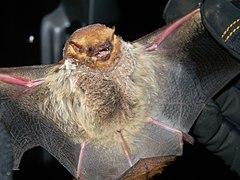 240px seminole bat (7351768292)
