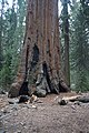 Sequoya National forest Giant Forest en2016 (31).JPG