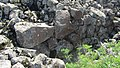 Sevaberd Fortress ruins (132).jpg