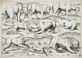 Sheet of Animals LACMA 54.70.10.jpg