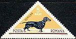 Short-haired-Dachshund-Canis-lupus-familiaris Romania 1965.jpg