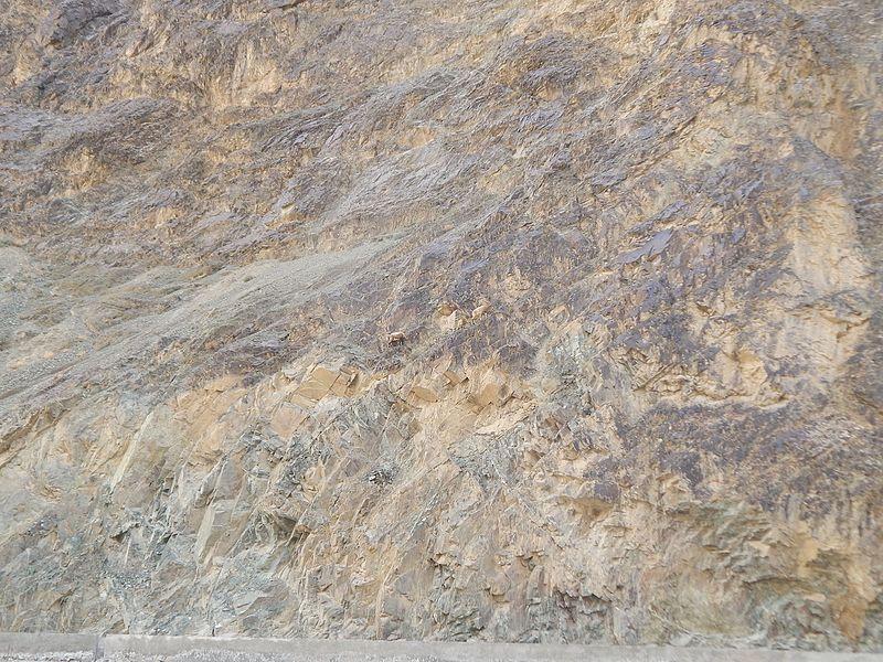 File:Siberian ibex (Capra sibirica) camouflage in mountains.jpg