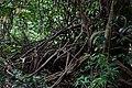 Singapore Botanic Gardens (4043121398).jpg