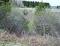 Sinkhole. Карстовая воронка - panoramio.jpg