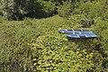 Skadar Lake, Montenegro 06.jpg