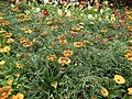 Snap from Lalbagh Flower Show Aug 2013 8377.JPG