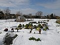 Snow cover on Great Gidding allotments - geograph.org.uk - 1157837.jpg