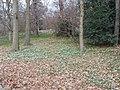 Snowdrops, conservation area, Kew Gardens - geograph.org.uk - 136253.jpg