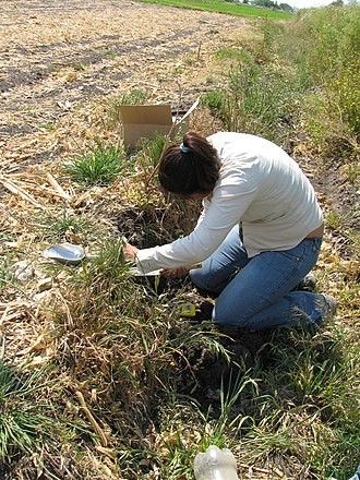 Environmental monitoring - Collecting a soil sample in Mexico for pathogen testing