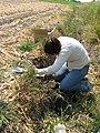 Soil samples (15083707144).jpg