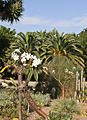 South Bay Botanic Garden, Palos Verdes Peninsula (8038135326).jpg