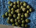 Soybeans 3.jpg