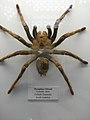 Spider (2070453445).jpg