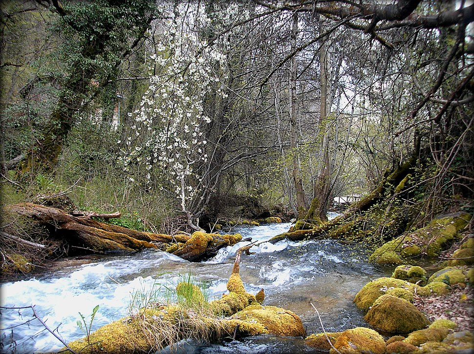 Spring in Vevchani springs