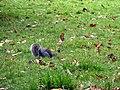 Squirrel (7976970476).jpg