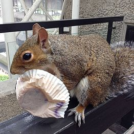 Squirrel eating cake in Barbican Center-1.jpg