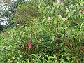 Sri Lanka (Southern Province)-Vegetation (8).jpg