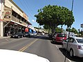 Starr-110412-5151-Cordia subcordata-habit-Front St Lahaina-Maui (24964653392).jpg