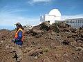 Starr-110515-6542-Asplenium adiantum nigrum-habitat with Kim-Science City-Maui (25068825416).jpg