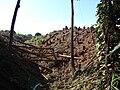 Starr 061212-2268 Eucalyptus sp..jpg