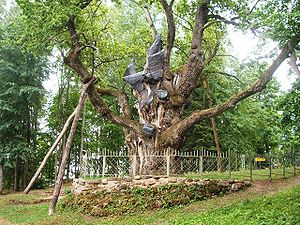 Perkūnas - According to the legends, Perkūnas has been worshiped beneath this over 1500-year-old oak tree in Stelmužė