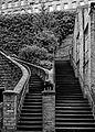 Steps, Dean Clough, Halifax (10232746456).jpg