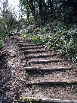 Steps to Fairhurst Glen - geograph.org.uk - 1191927