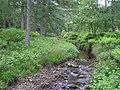 Stream, Gortin Glens Forest Park - geograph.org.uk - 1350773.jpg