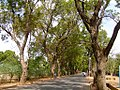 Street lined by trees in Burkina Faso, 2009 (2).jpg
