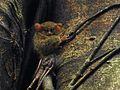 Sulawesi trsr DSCN0461 v1.JPG