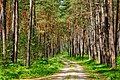 Summer path - Flickr - Stiller Beobachter.jpg