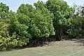 Sundarban Tiger Reserve and mangrove forest, West Bengal 18.jpg