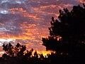 Sunset-over-the-pine-trees.jpg