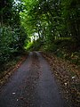 Swanbrook Lane, Pickly Wood - geograph.org.uk - 267613.jpg