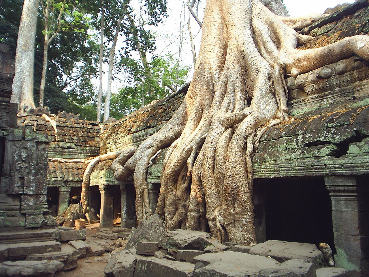 Nature S Temples Site Nytimes Com