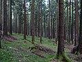 Taunus forest near Urselbach 2.jpg