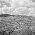Terrassen op de berghellingen van Judea, Bestanddeelnr 255-0841.jpg