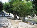 Thác Yang Bay- Khánh Hòa - panoramio (2).jpg