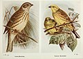 The birds of the British Isles and their eggs (8264842456).jpg