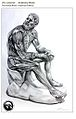 The bronze Boxer of Quirinal Anatomy.web.jpg