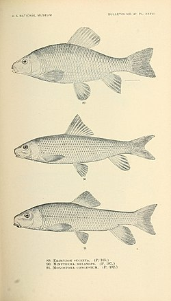 The fishes of North and Middle America (Pl. XXXVI) (7983312822).jpg