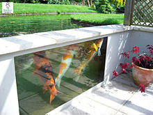 Koi pond wikipedia for Koi holding pool