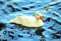 The swan princess.jpg