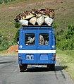 Transport of chickens, Madagascar.jpg